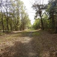 Spring walk 1
